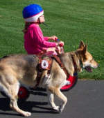 child riding therapy dog